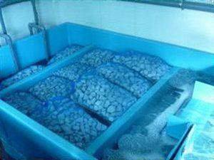 伊勢えび蓄養施設の水質浄化