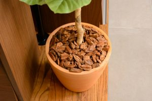 鉢植えやプランターに